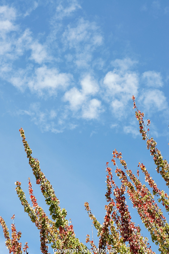 Autumn branches reaching into a blue sky