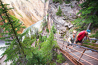 Hikers ascend Uncle Tom's Trail in the Grand Canyon of the Yellowstone in Yellowstone National Park.