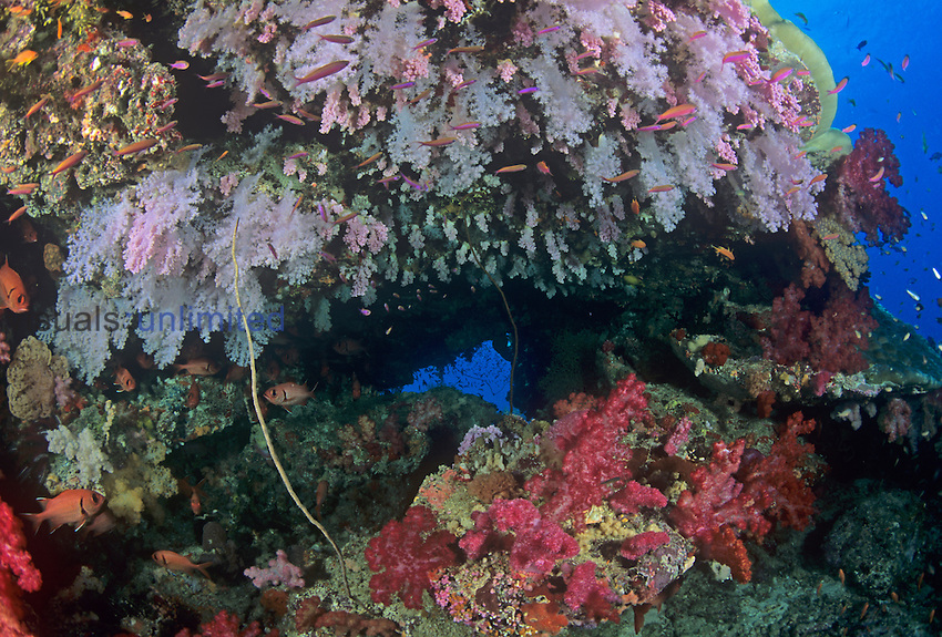 Underwater Fiji coral reef scene with Hard Corals, Alcyonarian Corals, and schooling Anthias fishes.