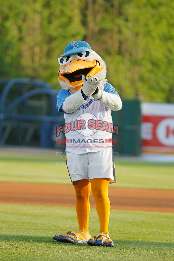 Myrtle Beach Pelicans mascot Splash Pelican before a game against the Lynchburg Hillcats at Ticketreturn Field at Pelicans Ballpark on April 14, 2017 in Myrtle Beach, South Carolina. Lynchburg defeated Myrtle Beach 5-2. (Robert Gurganus/Four Seam Images)