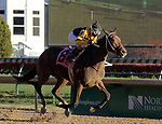 LOUISVILLE, KY -NOV 25: Dream Baby Dream (Ricardo Santana Jr.) wins the 7th race at Churchill Downs, Louisville, Kentucky, a maiden race for two year olds. Owner Dream Baby Dream Racing Stable (Leland C. Ackerley), trainer Steven M. Asmussen. By Into Mischief x Galetoire, by Songandaprayer. (Photo by Mary M. Meek/Eclipse Sportswire/Getty Images)