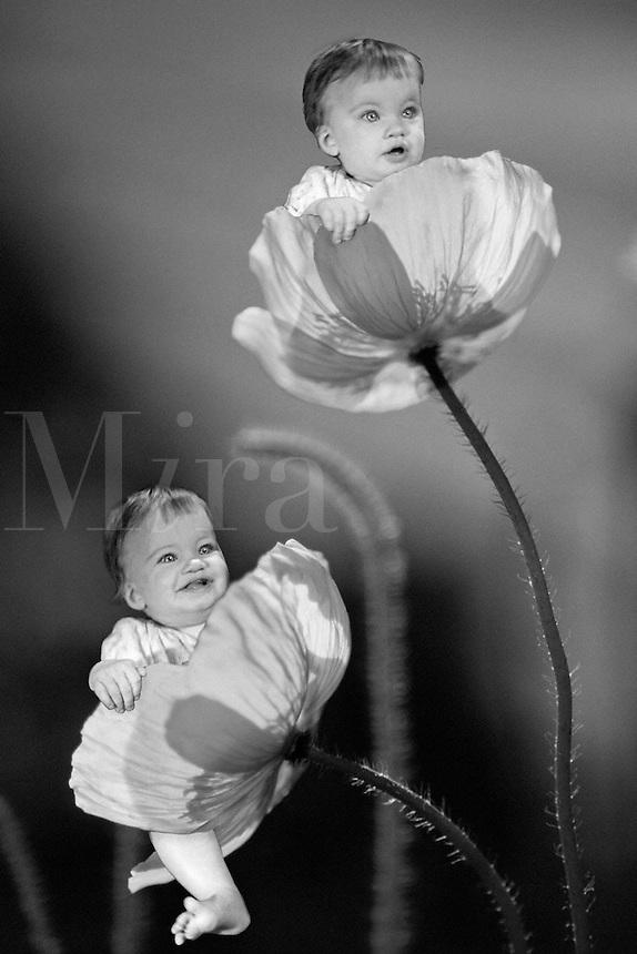 Digital composite image of baby girls sitting in Icelandic poppies.
