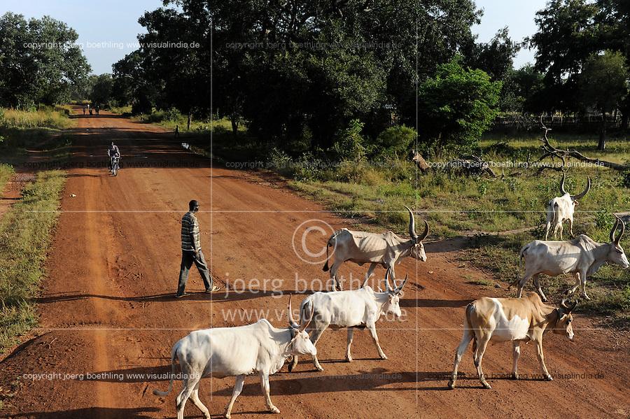 SOUTH SUDAN  Bahr al Ghazal region , Lakes State, road Juba to Rumbek, Dinka shepherd with grazing Cebu Cows / SUED-SUDAN  Bahr el Ghazal region , Lakes State, Rumbek , Zeburinder Herde