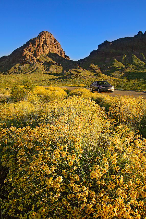 A car passes by wildflowers along Route 66, near Oatman, Black Mountains, Arizona.