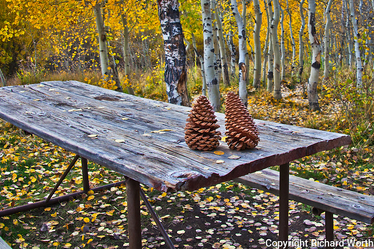 Pine cones on a picnic table surrounded by fallen autumn leaves at a campground near Lundy Lake in the Eastern Sierras.