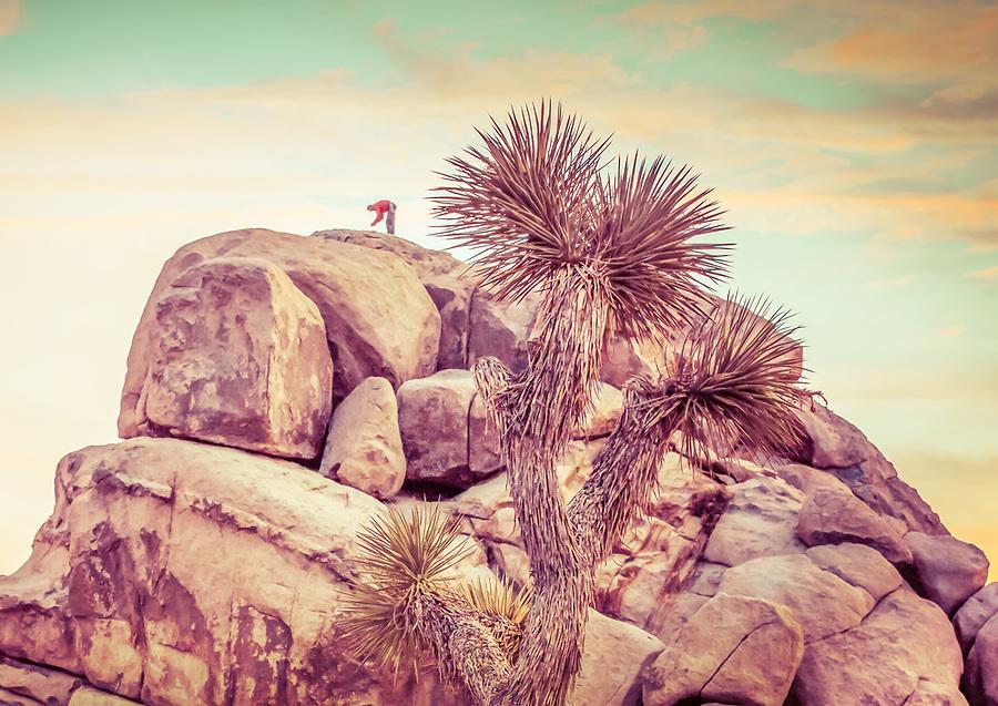 joshua tree, janice sullivan, sullivanjphotography, rock climer,