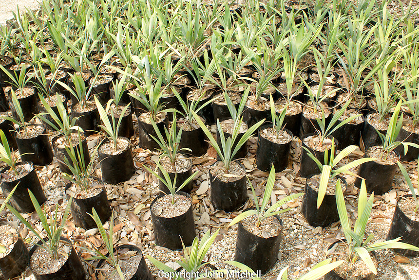 Palm tree seedlings at Hacienda Tres Rios, an eco-luxury resort on the Riviera Maya, Quintana Roo, Mexico.