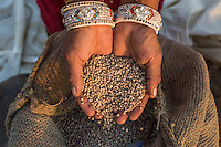Guar farmer Manju Sankaram bags the guar beans after threshing the crop in her shared field in Rajera village, Bikaner, Rajasthan, India on October 23, 2016. Non-profit organisation Technoserve works with farmers in Bikaner, providing technical support and training, causing increased yield from implementation of good agricultural practices as well as a switch to using better grains better suited to the given climate. Photograph by Suzanne Lee