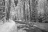 Road in forest <br />