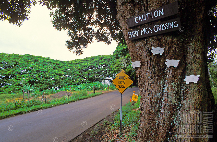 Humerous Baby Pig Crossing sign just past Hana on the Hana Highway