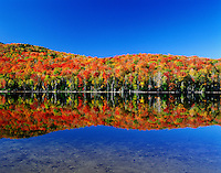 USA, New York, Adirondack State Park. Autumn colors reflected in Heart lake