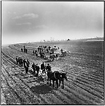 Working conditions in the arid province of Heilongjiang were extremely rudimentary, as peasants depended mainly on draft animals and their own physical labor to sow millet, one of the region's main crops. Ashihe commune, Acheng county, 20 April, 1965