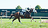 Marvelous Chester winning at Delaware Park on 9/19/13