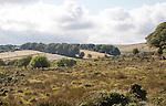 Moorland farming landscape, Dartmoor national park, near Postbridge, Devon, England, UK