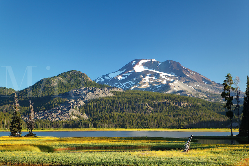 South Sister rises above flowering meadow and Sparks Lake at dawn, Cascade Lakes Scenic Byway, Oregon, USA, North America