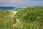 Herring Cove Beach, Cape Cod National Seashore, Provincetown, Massachusetts, USA