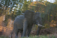 Reflection of an elephant in the surface of the Chongwe River in Lower Zambezi National Park