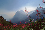 Glacier Mountains and fireweed flowers in smokey fog Glacier National Park, Montana, USA