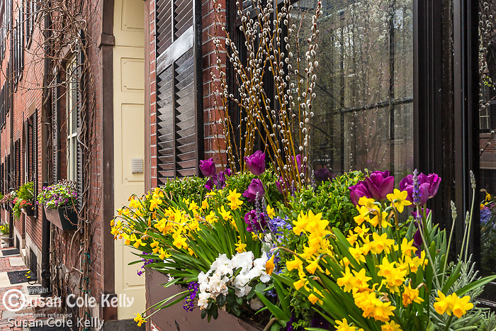 Window boxes on Beacon Hill, Boston, Massachusetts, USA