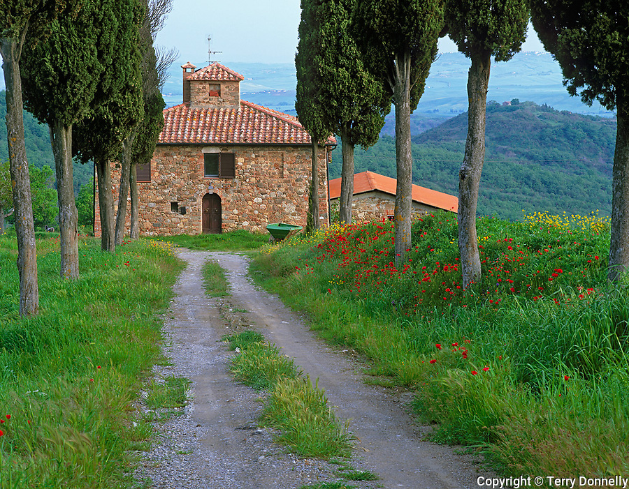 Tuscany, Italy      <br /> Stone farmhouse and cypress lined gravel road at Contignano in the Val d'Orcia