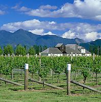New Zealand, South Island, Blenheim: Vineyards | Neuseeland, Suedinsel, Blenheim: Weinanbau