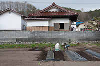 Old people have started farming traditional plots of land in Kawauchi, Fukushima, Japan. Tuesday April 30th 2013. The town was evacuated after the March 11th 2011 disaster at the nearby Fukushima Daichi nuclear plant  but has now nominally been decontaminated and residents have begun moving back.