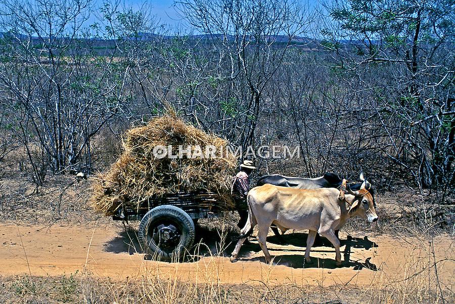 Transporte em carro-de-boi no sertão de Pernambuco. 2000. Foto de Ricardo Azoury.