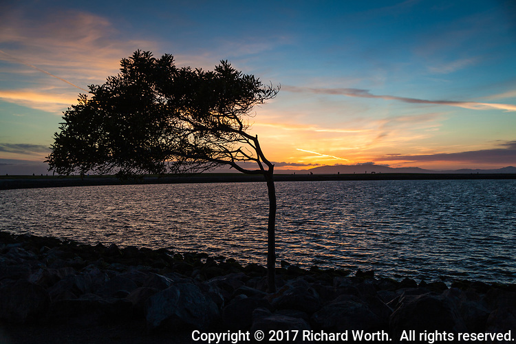 The wind-blown tree at the edge of the small boat lagoon at San Leandro Marina Park on San Francisco Bay moments after the sun passed the horizon.