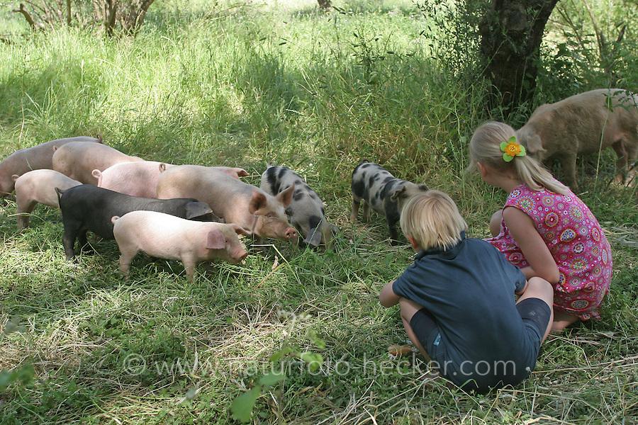 Kinder mit Hausschwein, Haus-Schwein, Schwein, Wild umherlaufende Schweine in Griechenland, Glückliche Schweine, hog, pig, pigs, swine