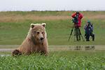 Brown bear & photographers, Alaska