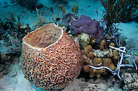 Sponges, Bahama Islands