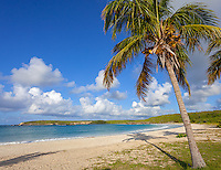 Vieques, Puerto Rico: Palm tree on the edge of a sandy bay at Red Beach (Playa Caracas)