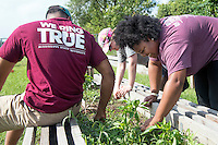 Service DAWGS Day:  MSU student volunteers helping in the garden at the Boys &amp; Girls Club of Starkville<br />  (photo by Beth Wynn / &copy; Mississippi State University)