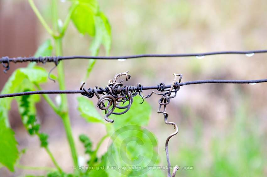 metal wire with old twigs chateau curson dom pochon crozes hermitage rhone france
