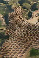 Aerial views, olive farming, Algodor, Spain, La Mancha