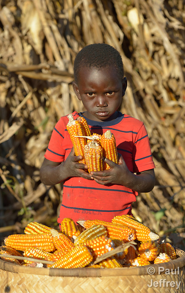 Three-year old Jacob Myula places ears of corn into a basket as his parents harvest corn in Edundu, Malawi. They and other farmers in the village have benefited from intercropping and crop rotation practices they learned from the Malawi Farmer-to-Farmer Agro-Ecology project of the Ekwendeni Mission Hospital AIDS Program, a program of the Livingstonia Synod of the Church of Central Africa Presbyterian.