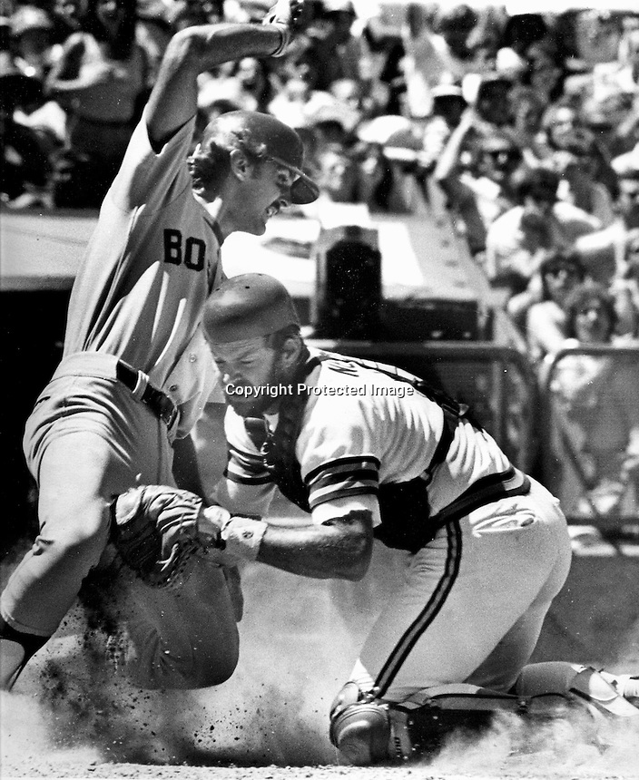 Boston Red Sox runner Glenn Hoffman is tagged out at home by Oakland A's catcher Jeff Newman. (1981 photo by Ron Riesterer)