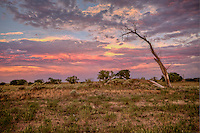Sunset on the Cimarron National Grassland in Western Kansas.