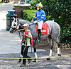 Major King before The Hockessin Stakes at Delaware Park racetrack on 6/18/14