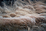Wind and Grass.  From the Palmer Divide Series.