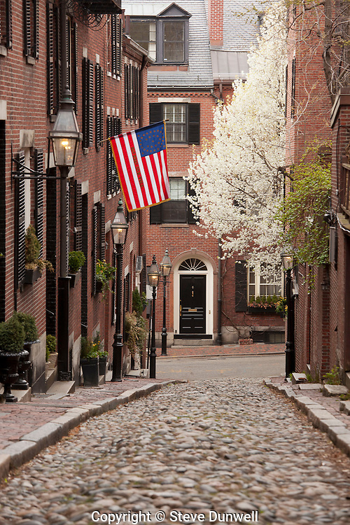 Acorn St. with flowering pear tree, , Beacon Hill, Boston, MA