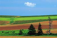farmer's fields in spring<br /> Margate<br /> Prince Edward Island<br /> Canada