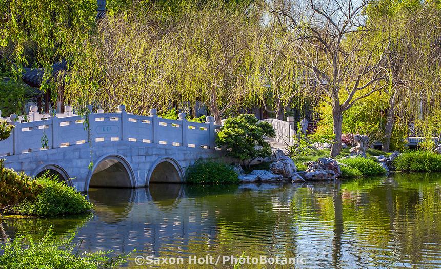 Chinese garden bridge over pond at Huntington Botanic Garden