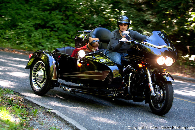 Pit bull mix, Lucy, rides in a Liberty Sidecar next to her mom, Brande Schweitzer, who drives a Harley-Davidson, in Seattle, Washington.