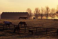Some of the world's fastest Thoroughbreds--like Seabiscuit and Secretariat--lived at Claiborne, one of the oldest and largest horse farms in the Bluegrass region.