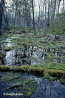 BS01-001a  Woodland bog