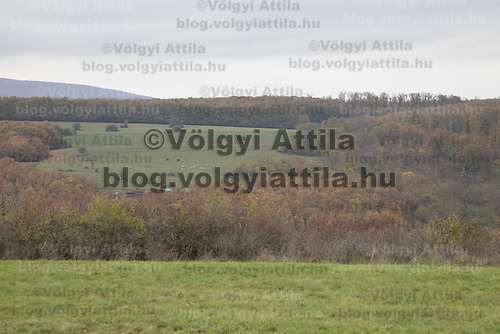 Autumn view of a hill in Zebegeny (about 70 kilometres north of capital city Budapest), Hungary on Oct. 28, 2017. ATTILA VOLGYI
