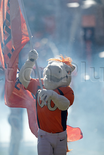 24.01.2016. Denver, Colorado, USA. The NFL AFC Championship American Football match.   Broncos mascot MILES runs on the field to start off the introductions of the Bronco players at Sports Authority Field at Mile High Sunday afternoon. The Broncos beat the Patriots 20-18.
