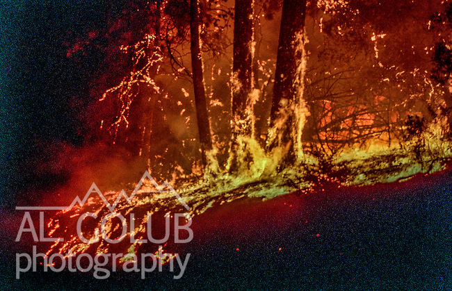 August 18, 1992 Angels Camp, California -- Old Gulch Fire— Fire rolls down hillside out of control on Sheep Ranch Road.  The Old Gulch Fire raged over some 18,000 acres, destroying 42 homes while threatening the Mother Lode communities of Murphys, Sheep Ranch, Avery and Forest Meadows.