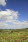 Israel, Shephelah, Scenery in Park Adulam